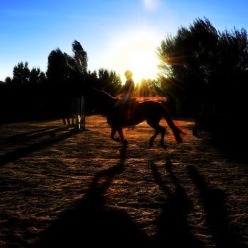... equitazione (3) ...