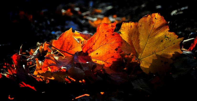 ... sinfonia d'autunno (06) ...
