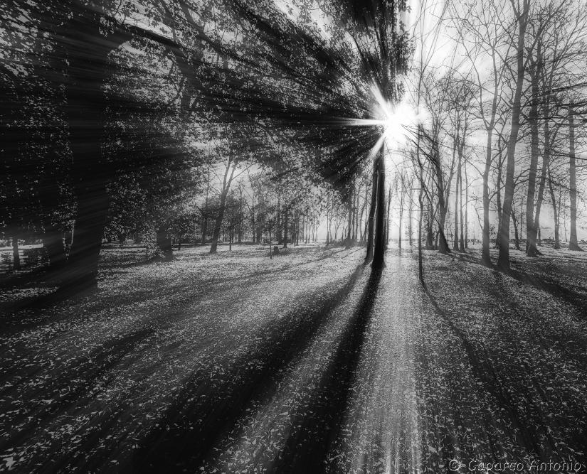 Alberi in bianco e nero sprea fotografia - Pagine a colori in bianco e nero ...