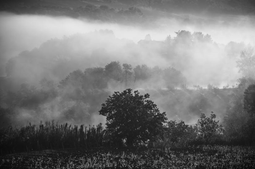 Albero tra la nebbia
