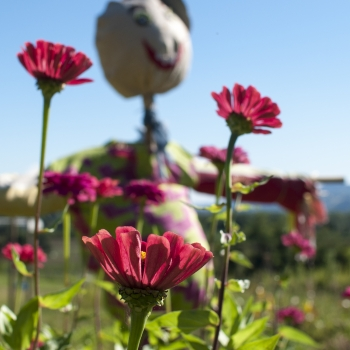 allegria tra i fiori