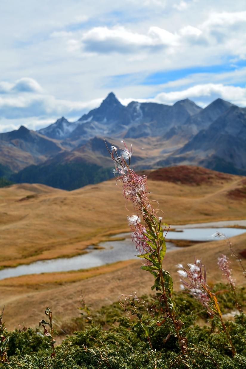 Alpi valsusine