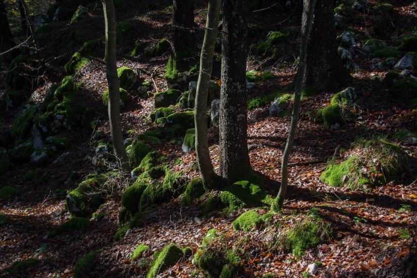 Altopiano di Asiago ...il bosco