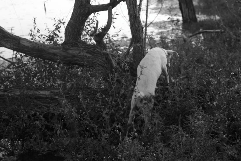 Animali a quattro passi nel parco increa