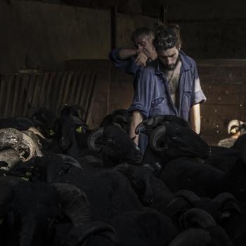 Antichi mestieri: pastori e transumanza