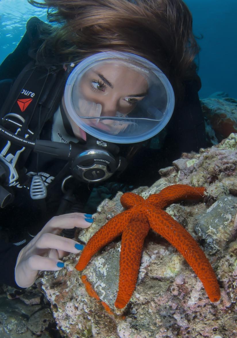 Armonia marina