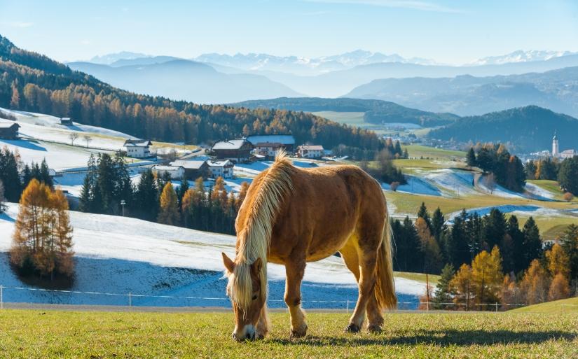Armonia tra animale e paesaggio