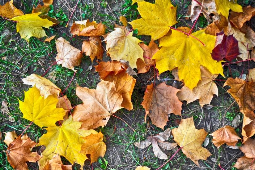 Autumn changes colors