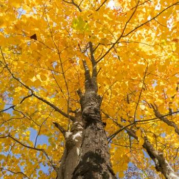 Autumn to Nacionalni park Plitvička jezera