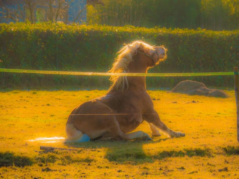 Backlit horse