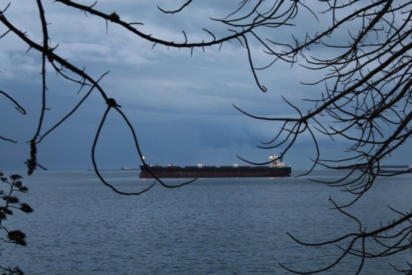 Barca incorniciata da rami.