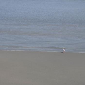 Bassa marea a Saint Michel