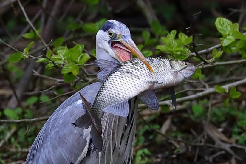 Battuta di pesca