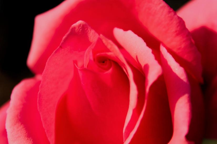 Bocca di rosa.