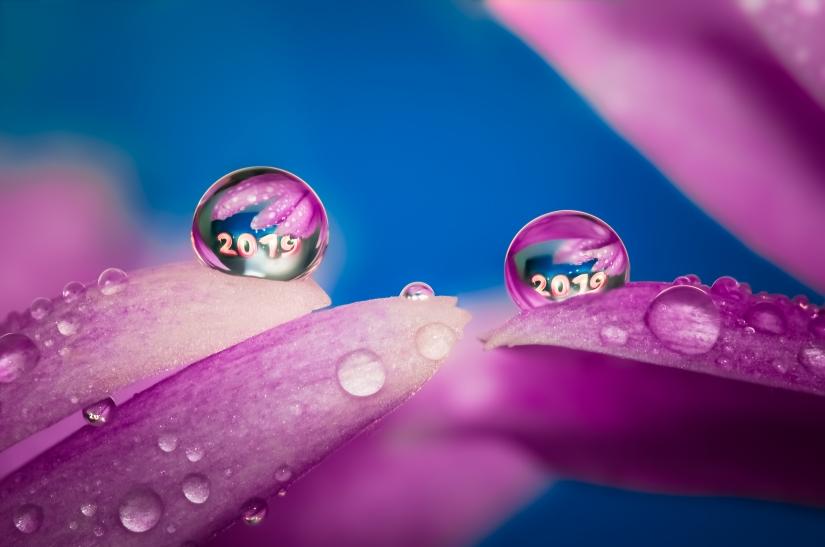 Buon 2019 a tutti - Drops Flowers Gocce Fiori Riflessi Mario jr Nicorelli macro fotografia Macro Photography