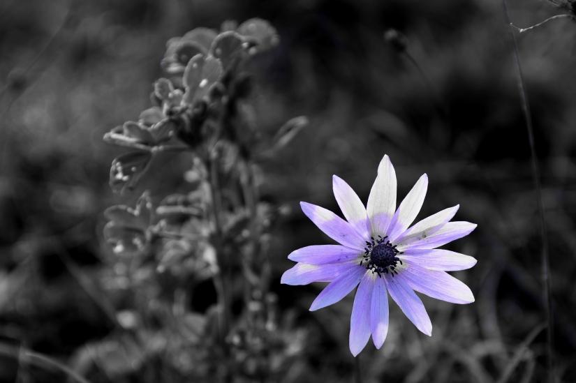 C'è un fiore di campo...