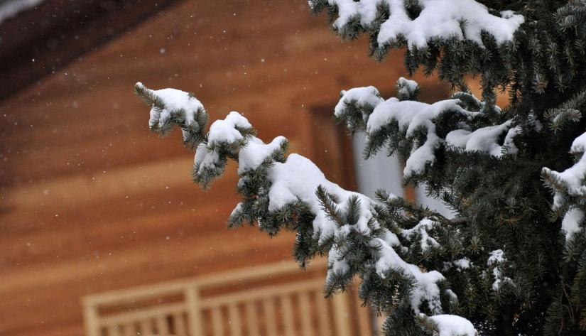 Candida neve