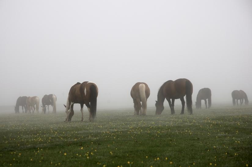 Cavalli al pian Grande