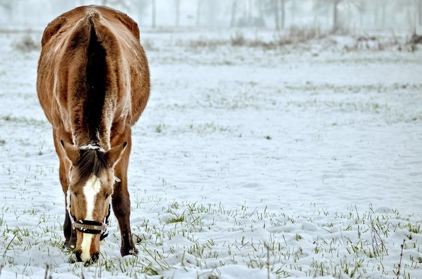Cavallo al gelo