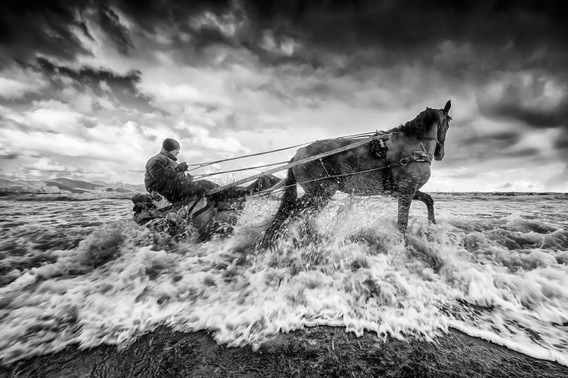 Cavallo della Domenica