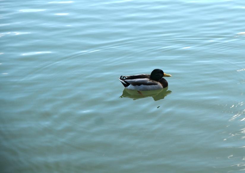 Che bello nuotare!