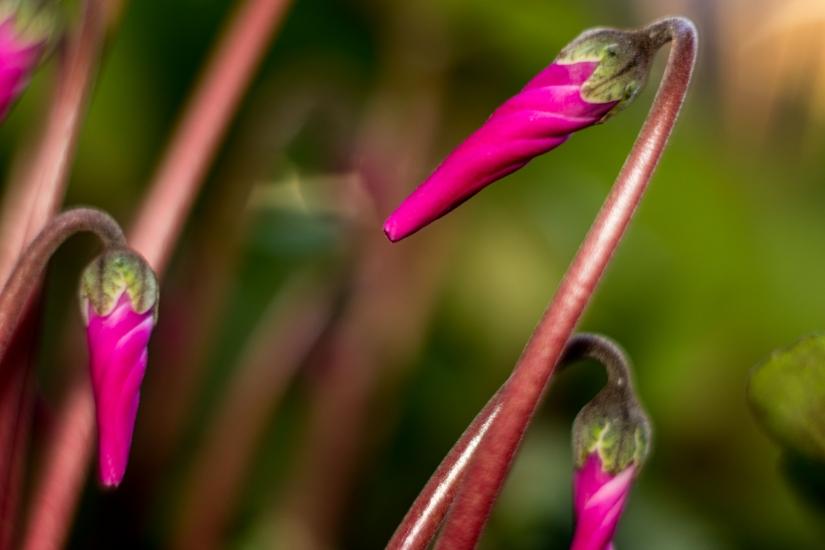 Close-up Natura