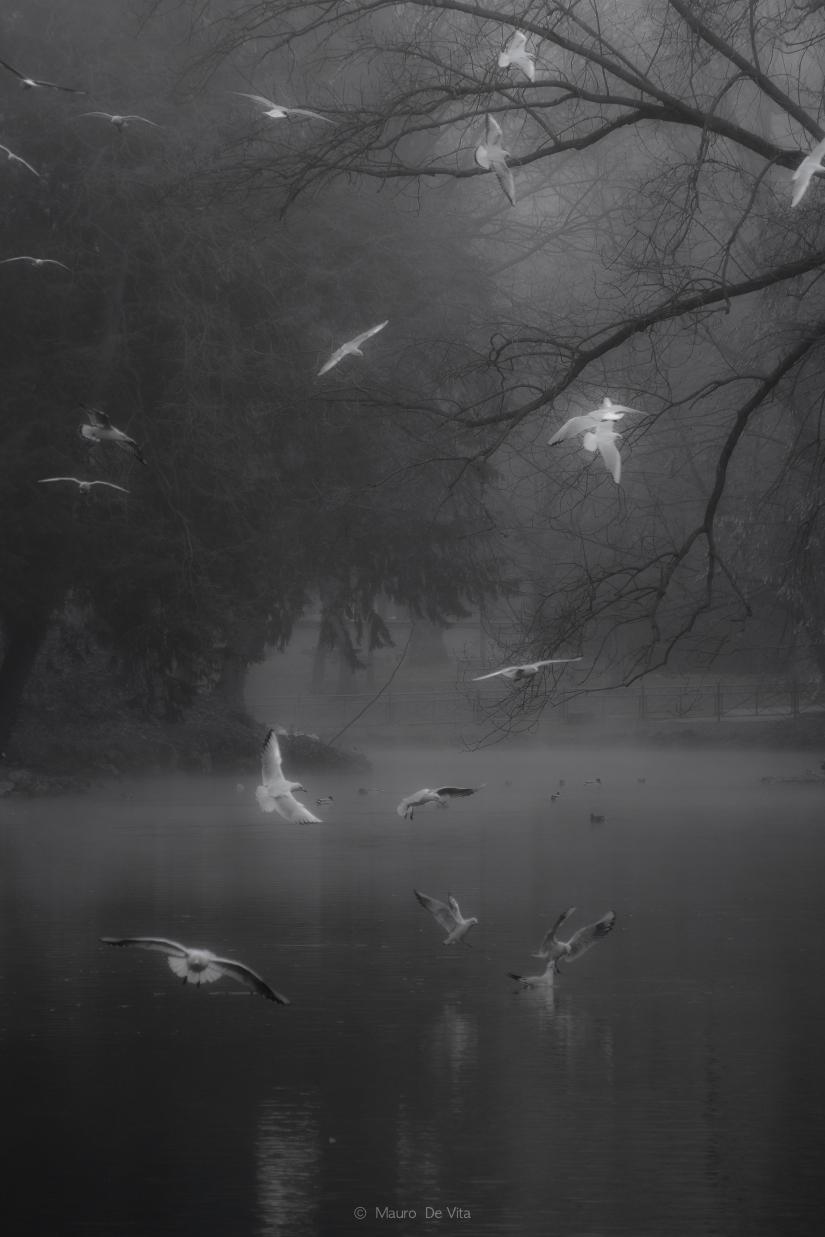 Colombe nella nebbia
