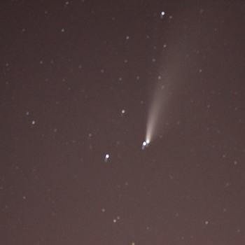 Cometa neowise