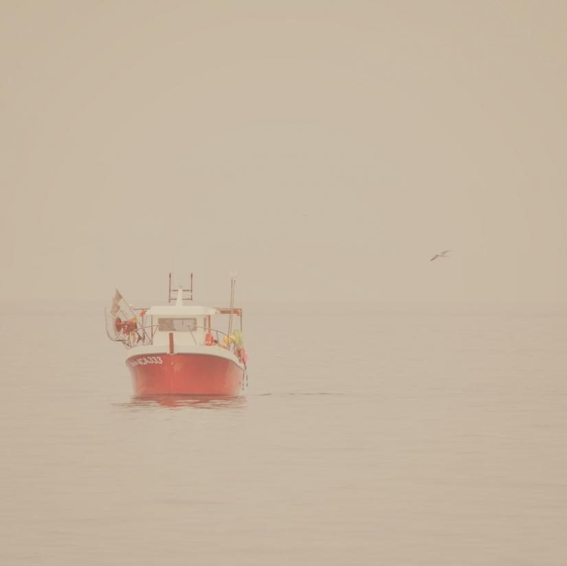 Compagna nebbia