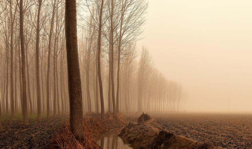Confondersi nella nebbia