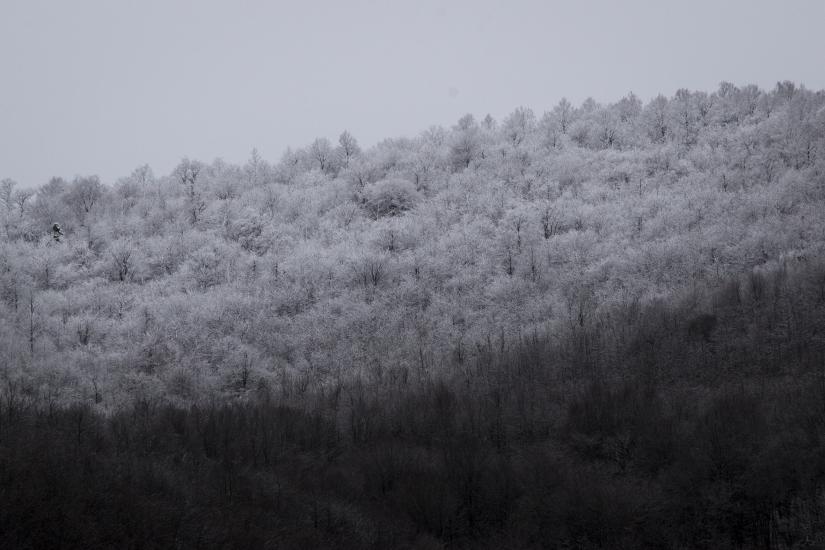 Contrasti di neve