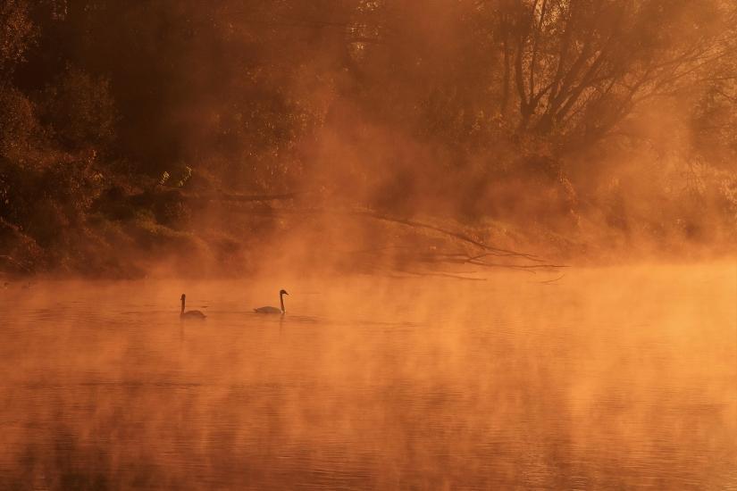 Coppia nella nebbia