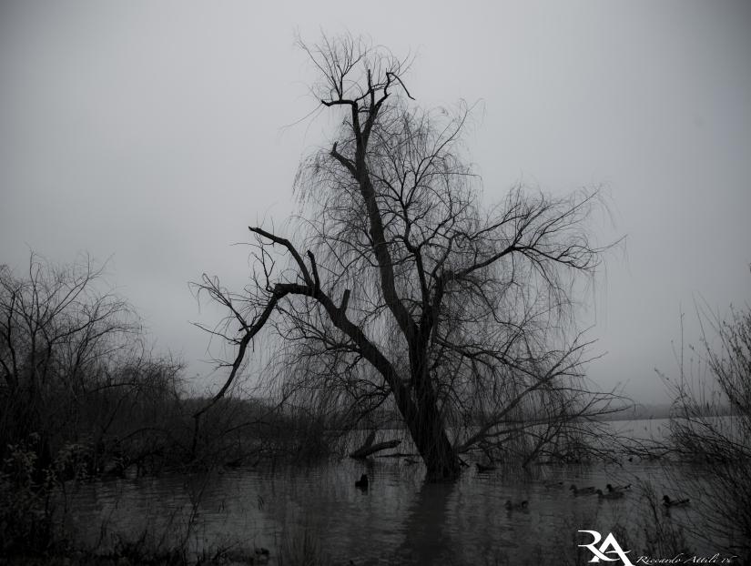 Creepy Lake