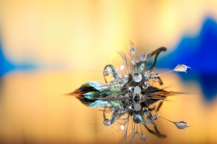 Dandelion Experiments 3.0
