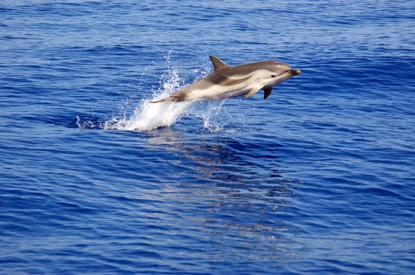 Delfini...