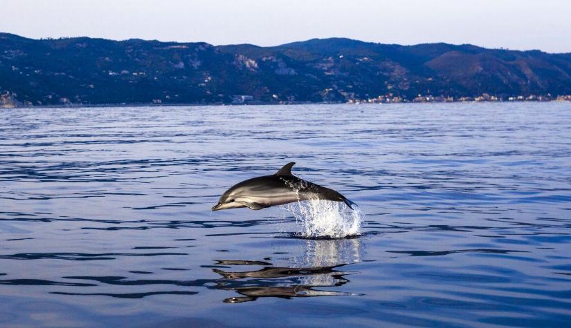 Delfino al Tramonto
