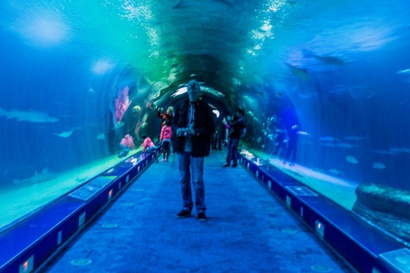 Dentro l'acquario 1 (La magia del Blu)