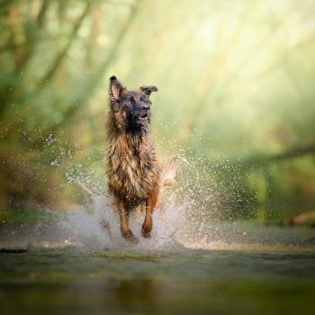 Dog Photography, ritrattistica di cani e creatività nei colori