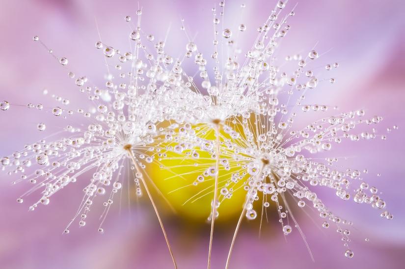 Drops & Flowers > gocce e riflessi by Mario Nicorelli con Nikon D300s macro fotografia