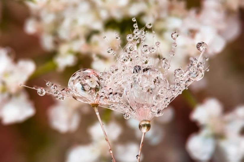 Drops e Flowers Gocce e Fiori Riflessi by Mario Nicorelli con Nikon D300s macro fotografia