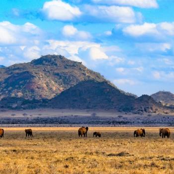 Elefanti Maestosi