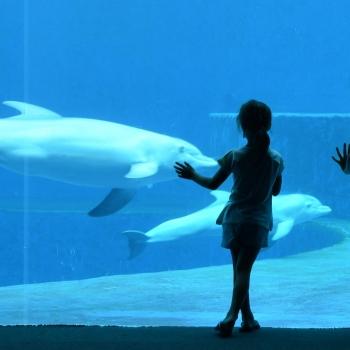 Emma, Chiara e i delfini