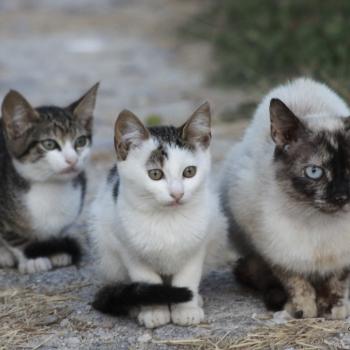 Famiglia felina
