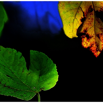 fantasie d'autunno