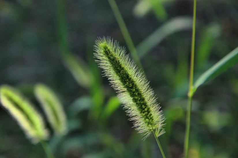 Filo d'erba