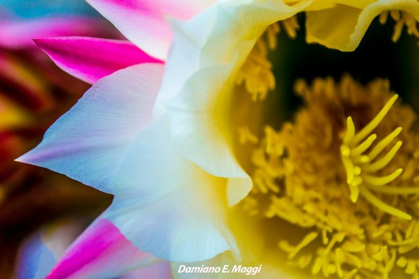 Fiore fluo