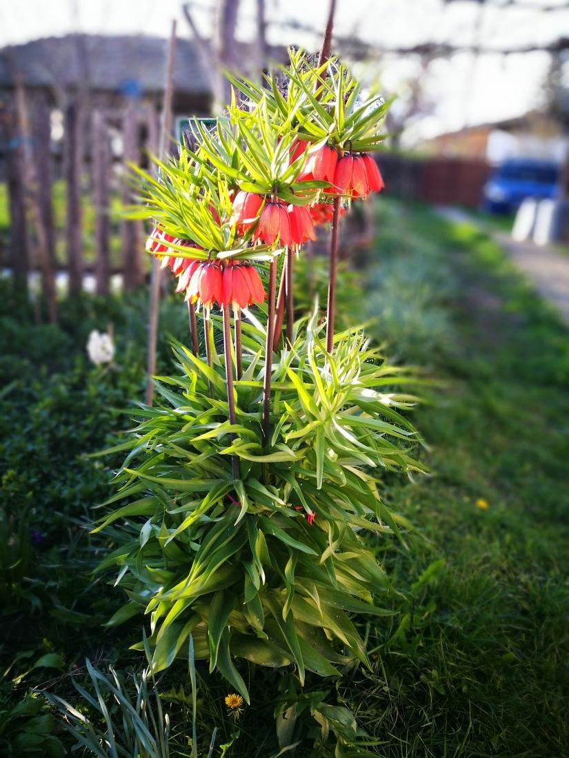 Fiore nel orto