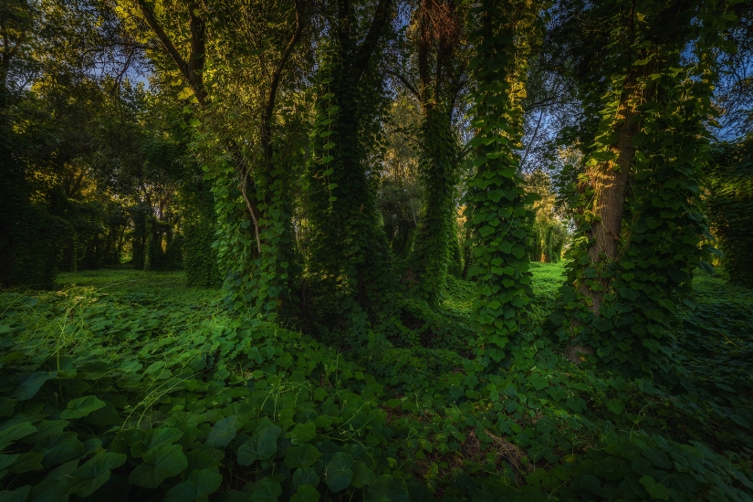 Foresta Incantata