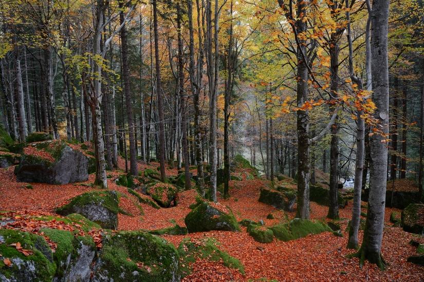 Foresta Regionale Bagni di Masino | Sprea Fotografia