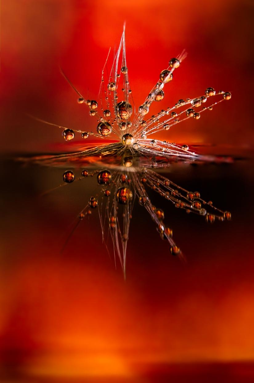 Fuoco cammina con me - Drops e Flowers Gocce e Fiori Riflessi by Mario JR Nicorelli con Nikon D300s macro fotografia
